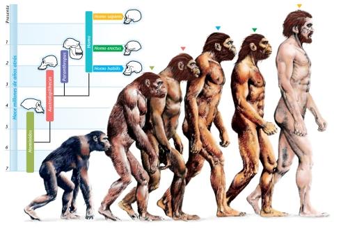 Evolução física