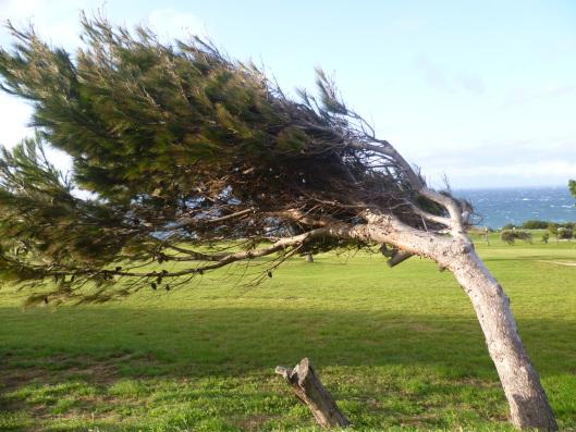 Árvore curvada