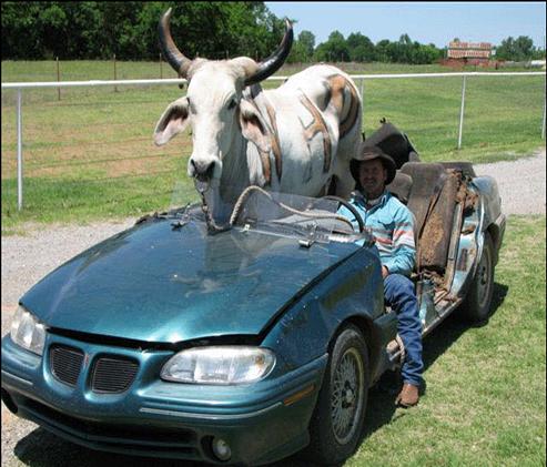 Carro na frente do boi